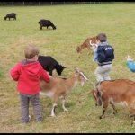 Activités enfants animaux RAM