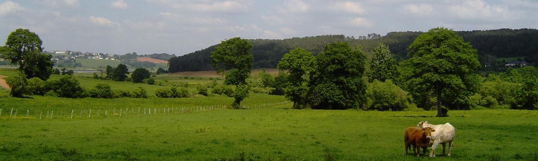 Paysage-champêtre-au-lieu-dit-Le-Pot-Nivillac